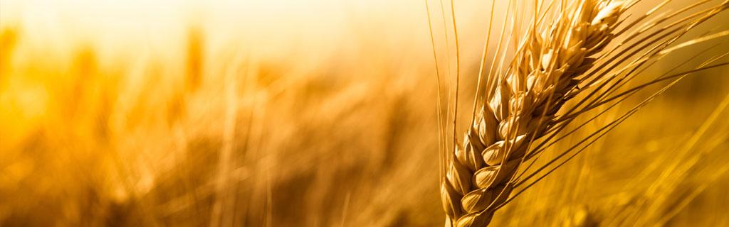 Vital Wheat Gluten - Novawes Import